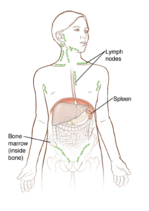 Outline of boy showing organs inside abdomen and outline of hip bone.